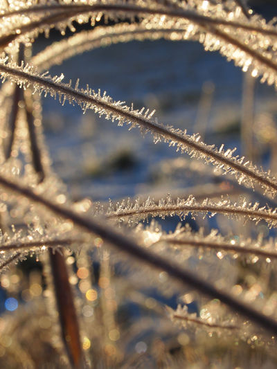 Artistic Field Frost Grass Low Angle View Sparkling Tranquility Winter Close-up Day Fragility Glowing Nature No People Outdoors