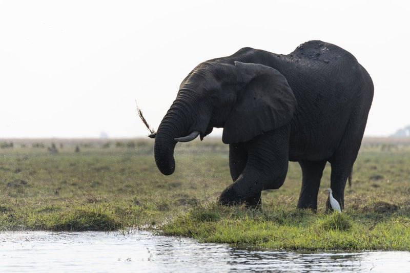 View of elephant on grassy field against sky
