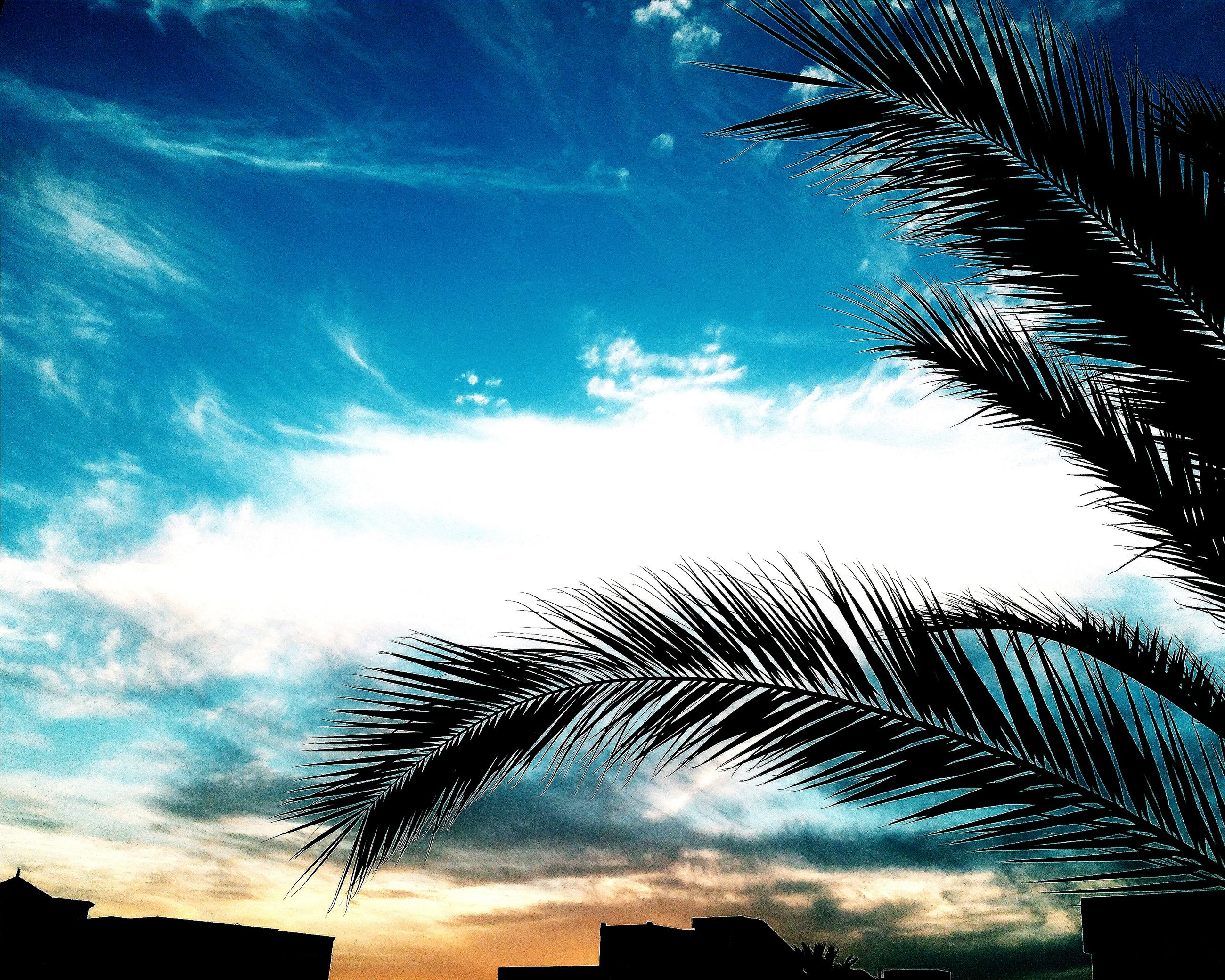 low angle view, sky, silhouette, palm tree, cloud - sky, built structure, tree, architecture, cloud, building exterior, nature, blue, cloudy, outdoors, no people, growth, tall - high, dusk, beauty in nature, high section