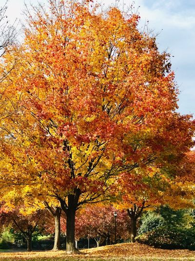 Autumn Delight Tree Sky Plant Nature Growth Orange Color Beauty In Nature No People Outdoors Day Tranquility Land Tranquil Scene Autumn Sunlight