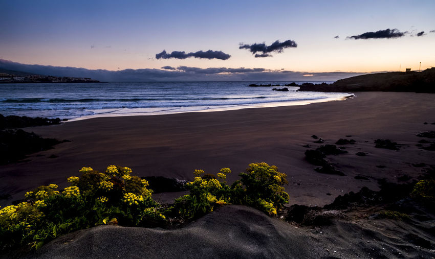 Yellow flowers in the natural clean wild beach before the sunrise - concept of environment and beautiful sandy place - vacation and surfer perfect place Horizon Over Water Landscape Seascape Coastline Shore Volcanic Rock Waves Water Vacations Island Sea Sky Beach Beauty In Nature Scenics - Nature Sunset Land Cloud - Sky Tranquility Nature Tranquil Scene Horizon Rock No People Outdoors Rock - Object Solid Yellow Flower Tropical Climate Spring Wildlife Sunrise Environment Sandy Beach Tranquility Nobody