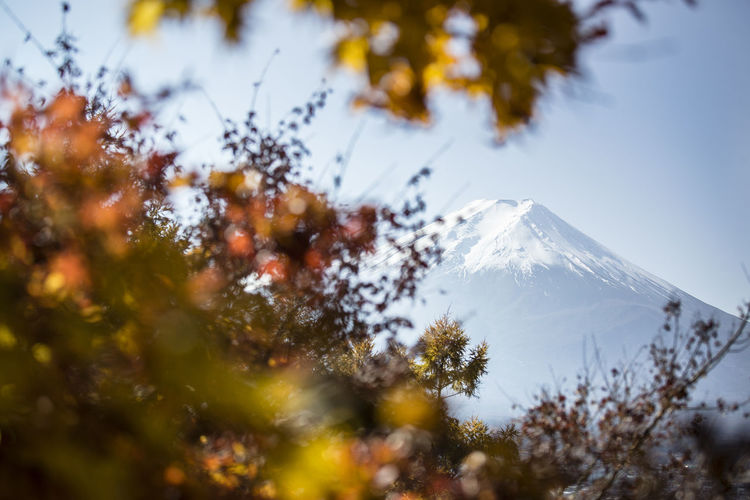 Mount Fuji in autumn. Autumn Autumn Colors Autumn Leaves Japan Japanese  Mount FuJi Mount Fuji Views In The Distance Beauty In Nature Day Growth Landscape Mountain Nature No People Outdoors Scenics Sky Snow Tranquility