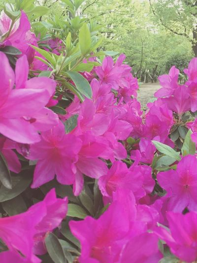 Flower Pink Color Green Color Beauty In Nature Way To Go Home