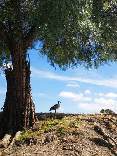 Bird 2 Bird Tree Perching Vulture Bird Of Prey Sky Animal Themes Cloud - Sky