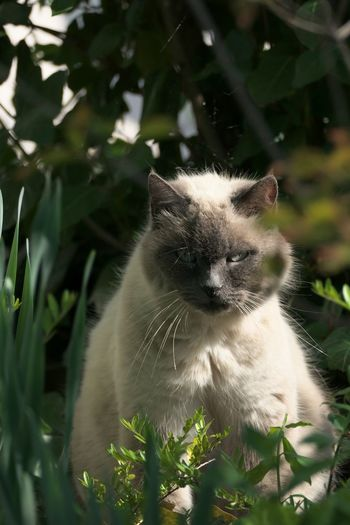 Animal Themes Animal Mammal One Animal Cat Feline Domestic Domestic Cat Domestic Animals Pets Vertebrate Plant Nature No People Day Whisker Land Focus On Foreground Close-up Outdoors