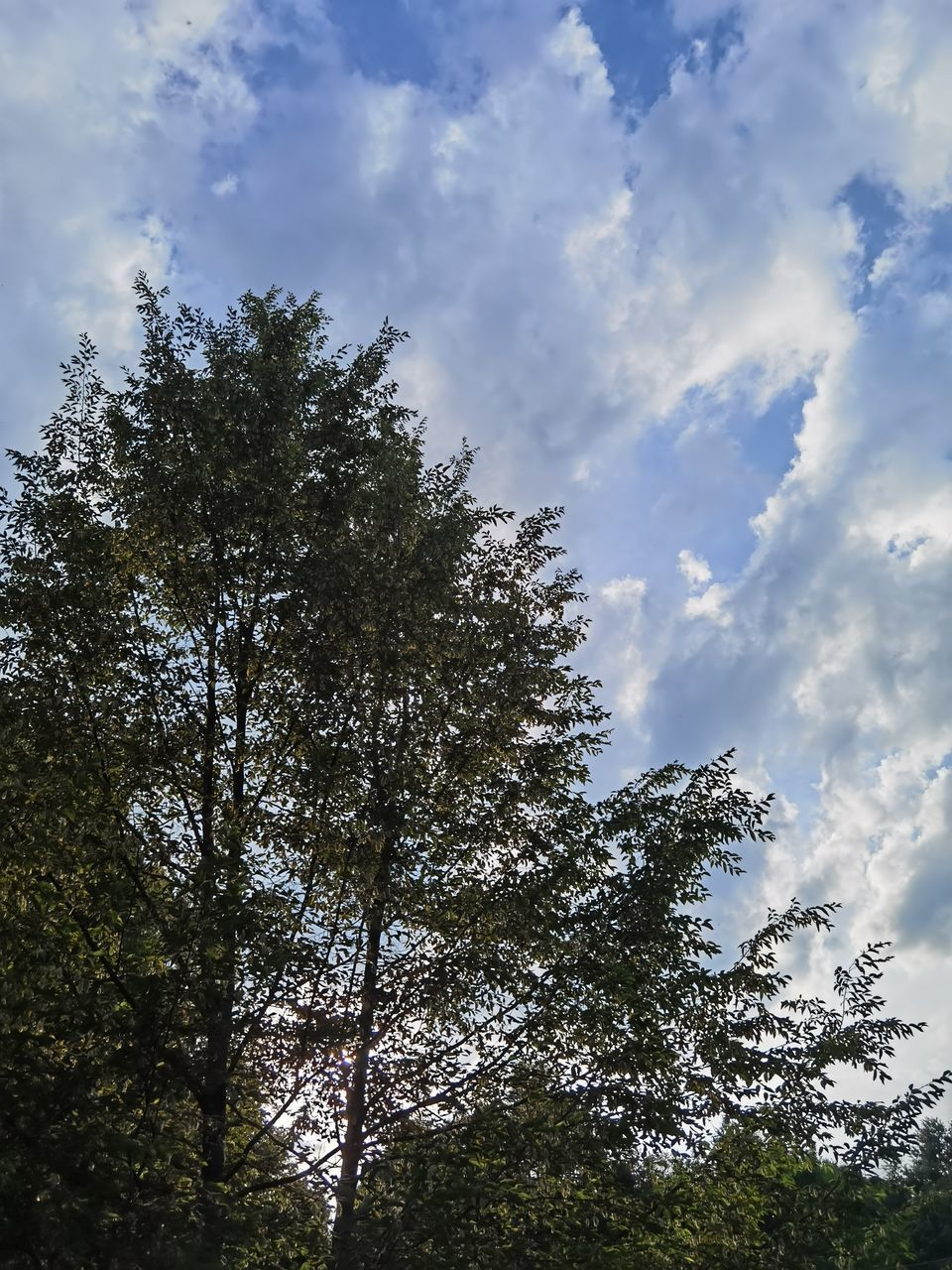LOW ANGLE VIEW OF TREE AGAINST SKY IN FOREST