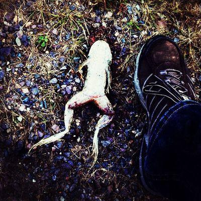Unfortunate Casualty. #miltonvt #vt Froglegs Vt 802 Frog Miltonvt Dead Igharjit Roadkill Igvermont Iphoneonly Igvt Photooftheday Instagramjit Picoftheday Vermont Casualty Runover Unfortunate Instamood Critter Bestoftheday Instagood Webstagram