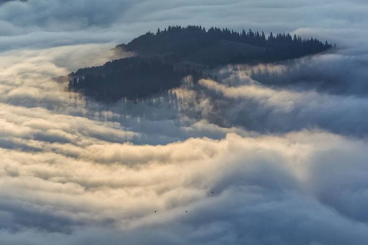 Heaven Morning Sunlight Trees Aerial View Beauty In Nature Beauty In Nature Cloudscape Dawn Dreamy Environment Fluffy Fog Forest Horizon Idyllic Landscape Majestic Minimalism Mist Mountain Outdoors Peaks Softness Sunrise
