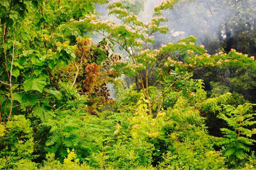 Nature Frontporch Taking Photos Rain