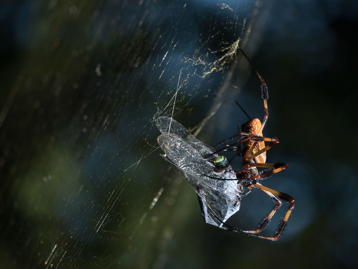 Close-up of insects mating on tree