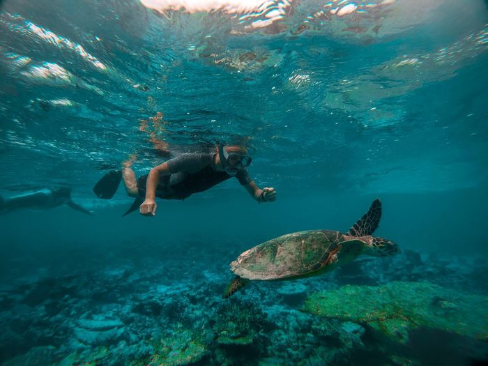 Man swimming by turtle undersea