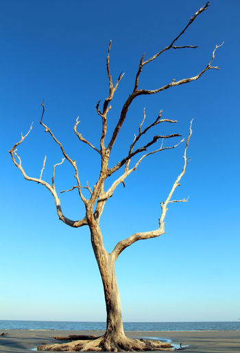 Tree by sea against clear sky