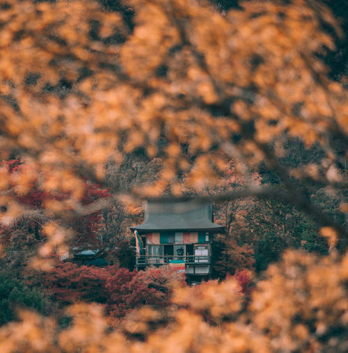 // autumn in kyoto // EyeEm Best Shots EyeEm Nature Lover Nature Autumn Autumn colors Autumn Leaves autumn mood Shootermag Shootermagazine AMPt_community Yellow Thedarksquare Built Structure Architecture Tree Building Exterior Building Plant House No People Growth Change Day Outdoors Selective Focus Land Beauty In Nature Residential District Sky Window