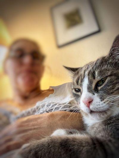 Cat Pets Mammal
