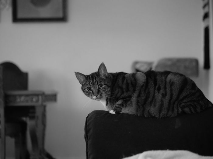 Portrait of tabby cat at home