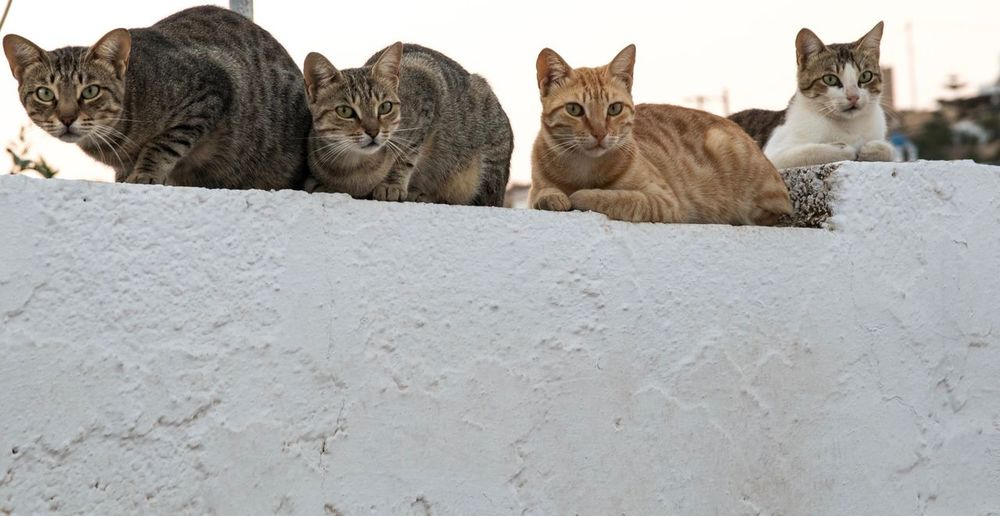 Cats Feline Greece Lipsi