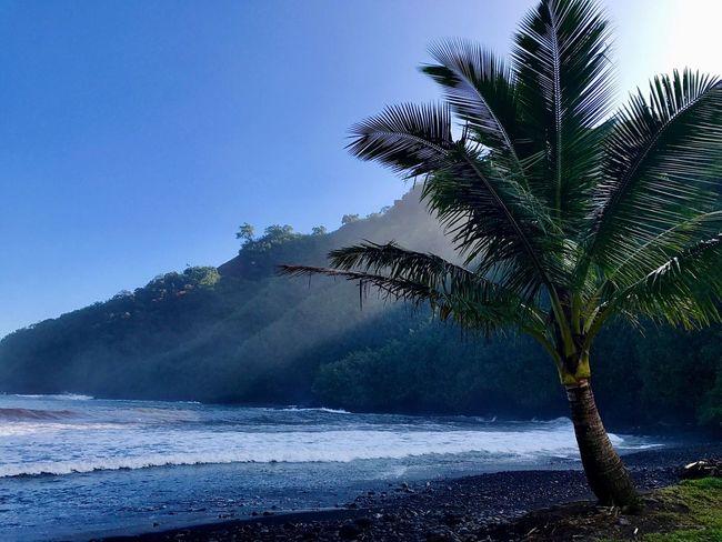 Maui, Hawaii Palm Tree Hawaii Tree And Sky EyeEm Nature Lover Maui Tree Nature Palm Tree Beauty In Nature Scenics Water Sea No People Outdoors Tranquil Scene Tranquility Beach Mountain Blue Day