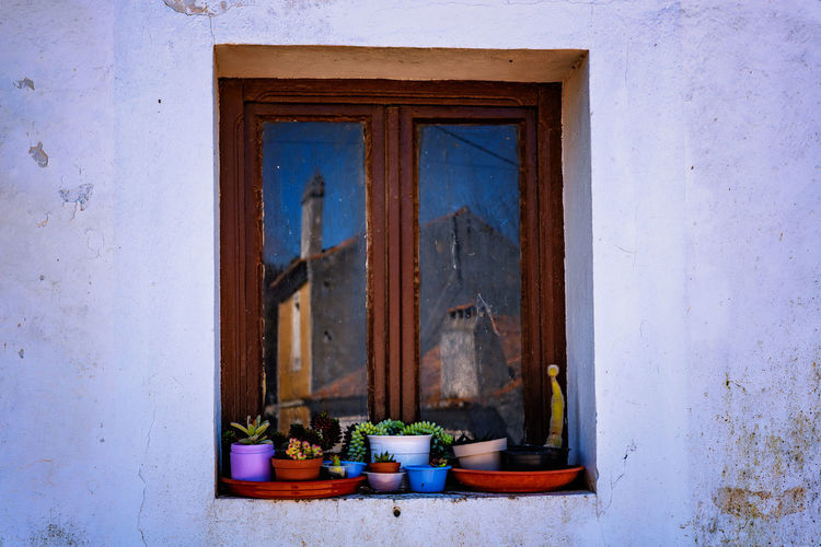 Potted plants on window of old building