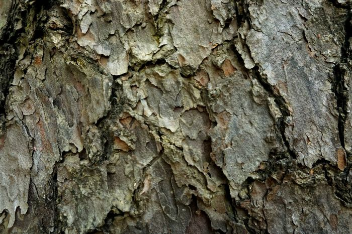Full frame shot of pattern on tree bark. Res: 6000*4000, SONY ILCE6000 Backgrounds Bark Bark Texture Brown Design Pattern Detail Formations Growth Natural Pattern Natural Pattern Pattern Pattern Pieces Pattern, Texture, Shape And Form Patterns & Textures Plant Bark Rock - Object Rough Shapes And Patterns  Textured  Tree Bark Patterns Tree Bark Texture Tree Trunk Tree Trunk Wood - Material Wood Pattern