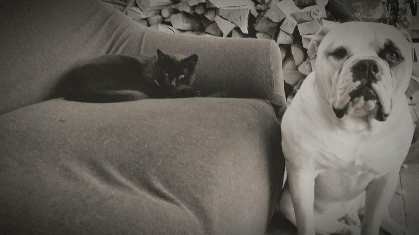 Casucucciamia My Cat ❤ Gatto Cane vicini...vicini!