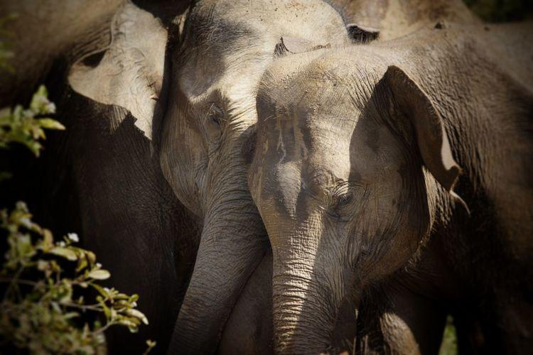 elefant Elephant Animals In The Wild Safari Animals Animal Wildlife Beauty In Nature Sunlight Nature No People Animal Themes Sri Lanka Travel The Week On EyeEm