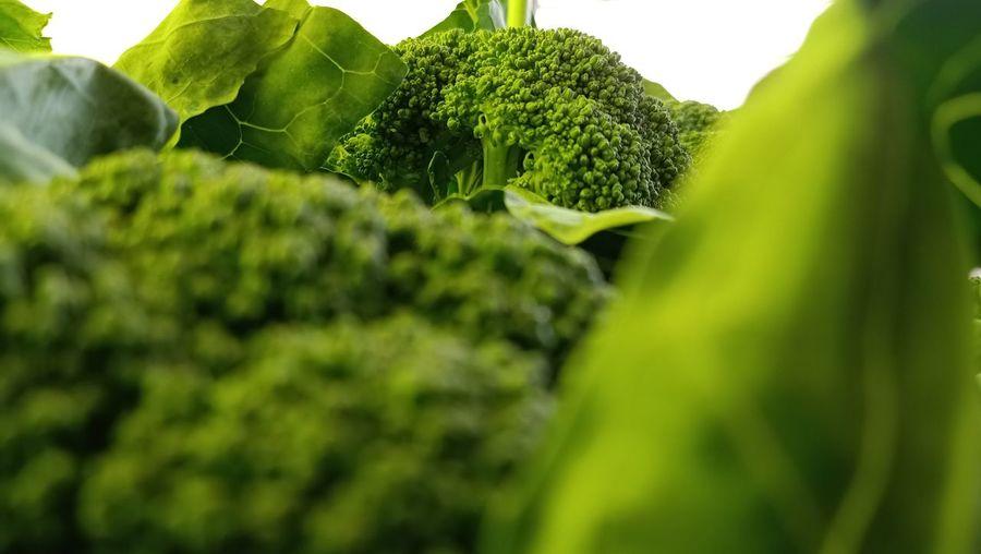 Close-up of fresh broccoli