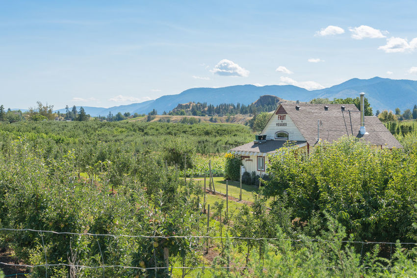Penticton, British Columbia/Canada - August 1, 2017: The Trail Store, located beside the Kettle Valley Rail Trail, is a popular stop for people walking or biking the trail. Afternoon Beautiful British Columbia, Canada KVR Trail Kettle Valley Rail Trail Market Naramata Naramata Bench Peach Trees Scenic Trail Store Travel Apple Trees  Blue Sky Editorial  Farm Market House Kvr Landscape Orchard Rural Scene Shop South Okanagan Summer Tourism
