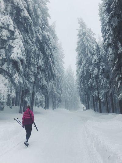 Snow Cold Temperature Sport Winter Winter Sport Tree Vacations Skiing