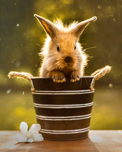 Animal Animal Themes Animal Wildlife Bunny,animla, Close-up Container Day Domestic Domestic Animals Easter Easter Bunny Focus On Foreground Indoors  Mammal Nature No People One Animal Pets Plant Rabbit - Animal Vertebrate Whisker Moments Of Happiness My Best Photo