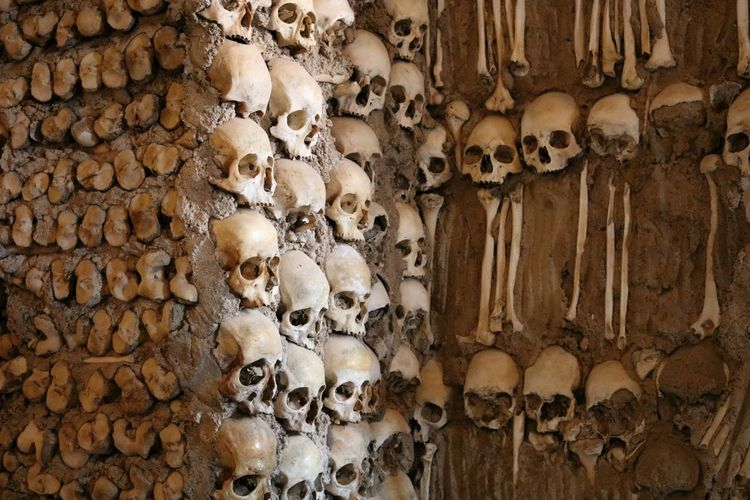View Of Human Bones With Skull On Wall
