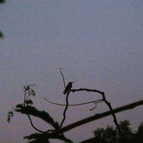 Nature No
