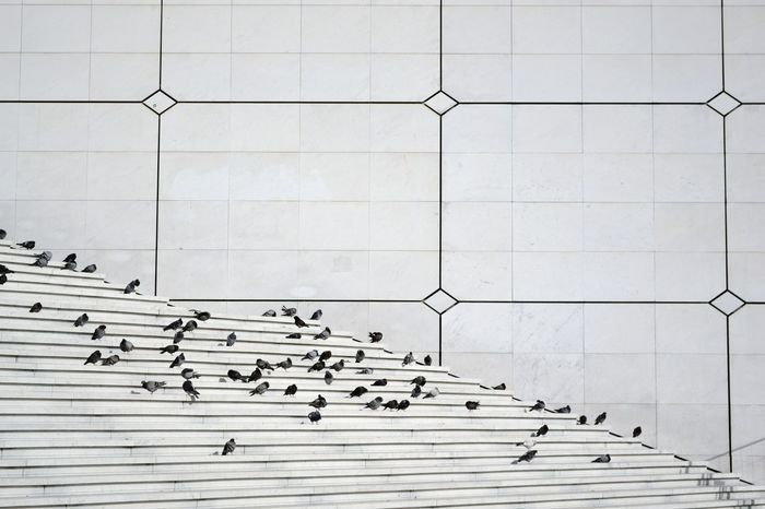 Some pigeons sitting on the stairs of La Grande Arche L'arche De La Defense Paris Open Edit Minimalism Pigeons Stairs Architecture EyeEm Best Shots Capture The Moment