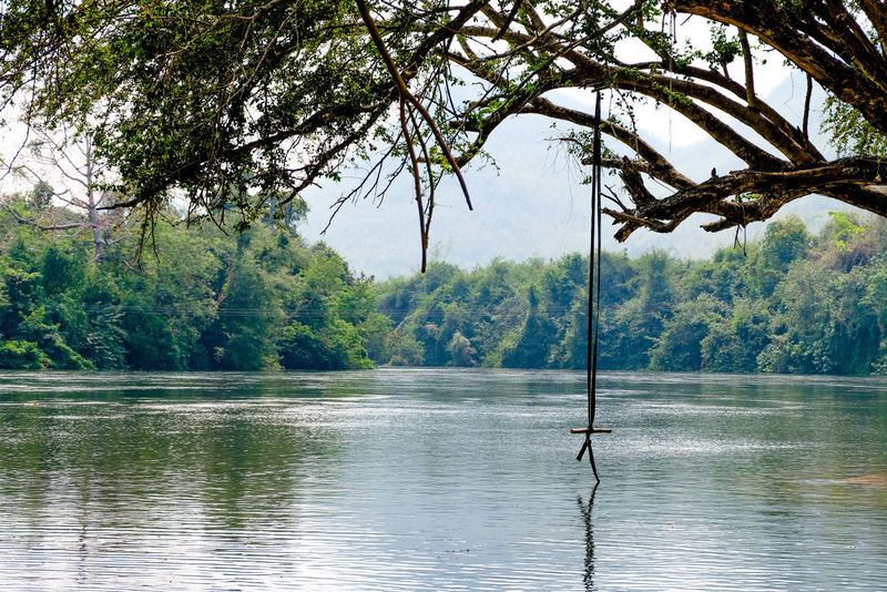 Rope swing hang on a big tree over the river Rope Beauty In Nature Big Tree Branch Day Fresh Time Hang On Tight Lake Mountain Nature Outdoors People Quite Place Reflection River Rope Swing Scenics Sky Swing Tranquil Scene Tranquility Tree Water Wide Wooden Raft