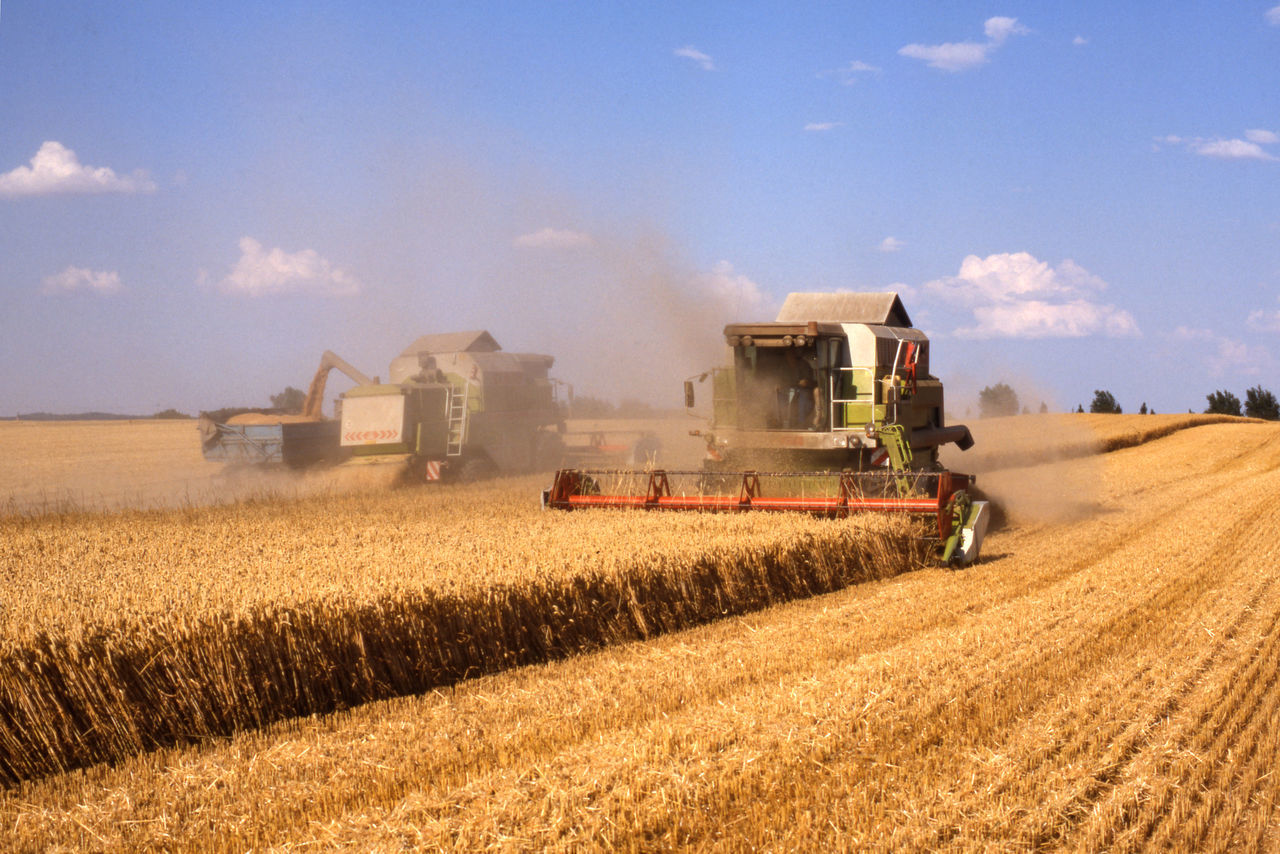 land, field, agriculture, landscape, sky, farm, rural scene, harvesting, combine harvester, plant, nature, cloud - sky, cereal plant, crop, environment, day, agricultural machinery, machinery, land vehicle, transportation, no people, outdoors