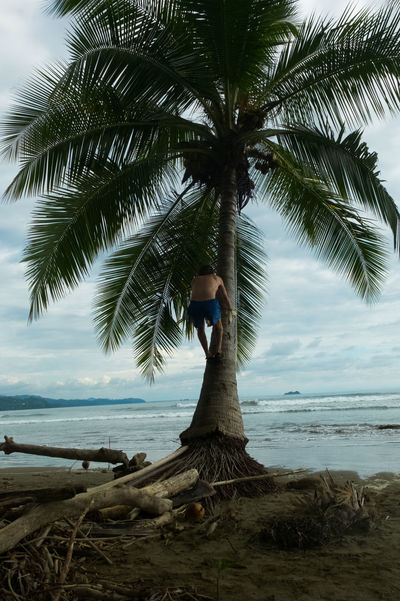Costa Rica Nature Palm Tree Beach Beauty In Nature Jungle Ocean Pacific Ocean Wildlife An Eye For Travel