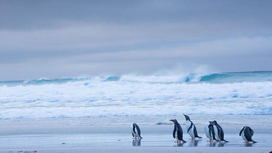 Scenic view of penguins at beach against sky