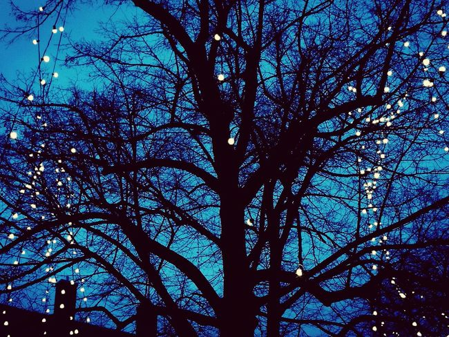Low Angle View Tree Sky Blue No People Silhouette Outdoors Bare Tree Treetop Soest Lights Christmas Decoration Christmas Lights Tree Low Angle View Adapted To The City