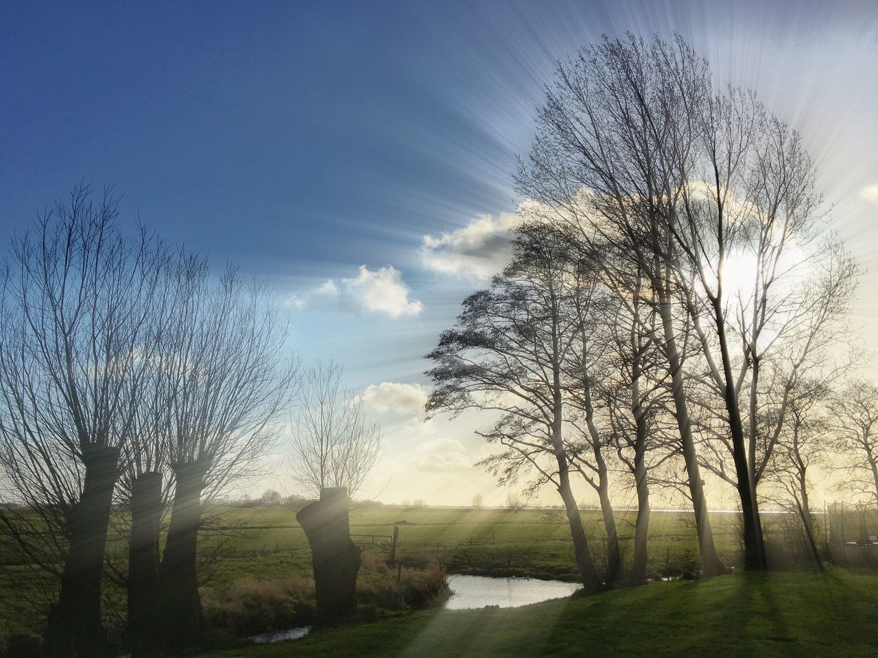 tree, bare tree, nature, sky, tranquility, grass, beauty in nature, tranquil scene, scenics, outdoors, no people, cloud - sky, day, growth, branch, water