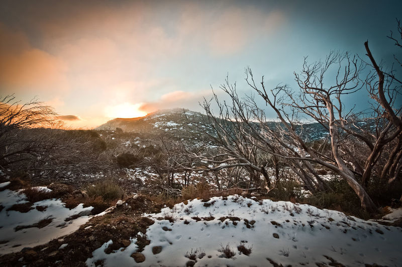 Mount Buffalo sunset Mount Buffalo Mount Buffalo National Park Mountain Bird Snow Winter Cold Temperature Sunset Sky Landscape Close-up Snowcapped Mountain Scenics Mountain Range Snowcapped Non-urban Scene Tranquility Weather