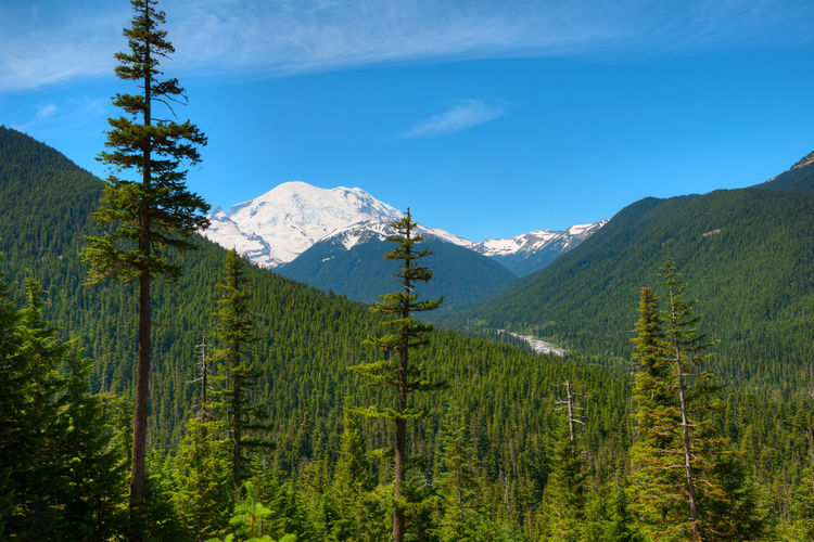 Panoramic view of pine trees and mountains against sky