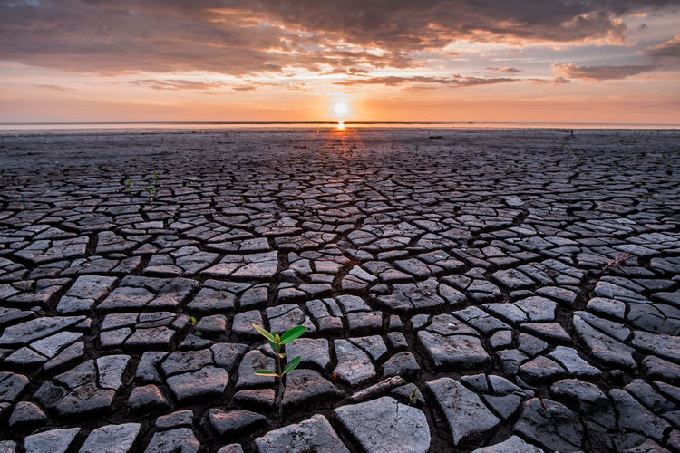New life born in drought Sun Sunset Nature Landscape Outdoors Tranquility New Life Low Tide Horizon Cracked Climate Environment Drought Beauty In Nature Tranquil Scene Non-urban Scene Horizon Over Water Cloud - Sky Arid Climate Salt Flat Scenics - Nature Idyllic EyeEm Selects