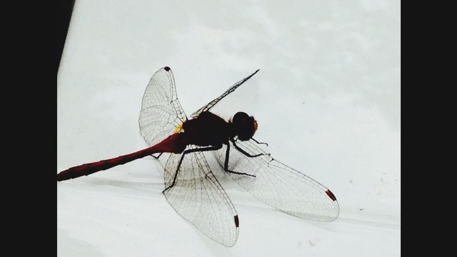 Beautiful Nature Dragonfly