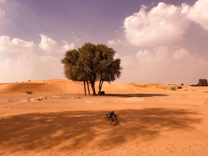 Trees on sand dune in desert against sky