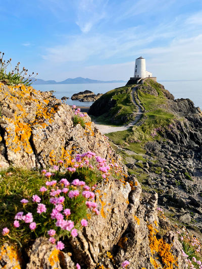 Scenic view of flowering plants by rocks against sky