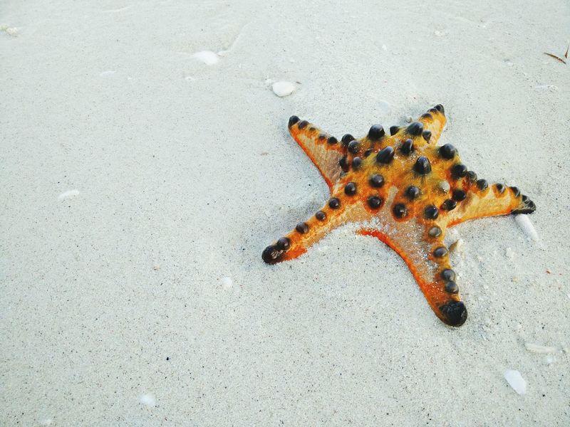 The KIOMI Collection Startfish Bintanglaut Beachphotography Beach Pantaitanahputih WhiteSandBeach Sumbawabesar NTB Setiindonesia