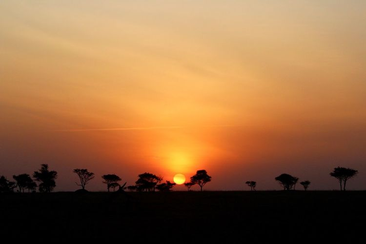 Africa Sunrise Atmosphere Beauty In Nature Calm Cloud Idyllic Landscape Majestic Nature Orange Color Outdoors Outline Palm Tree Romantic Sky Scenics Serengeti Sunrise Silhouette Sky Solitude Sun Sunrise Sunset Tranquil Scene Tranquility Tree