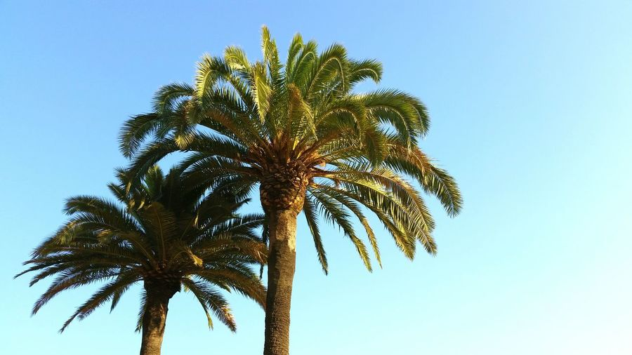 Tree Palm Tree Low Angle View Growth Nature No People Outdoors Beauty In Nature Sky Day Barcelona Spain ✈️🇪🇸