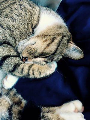 Pet Portraits Domestic Cat One Animal Pets Sleeping Feline Pet Portraits