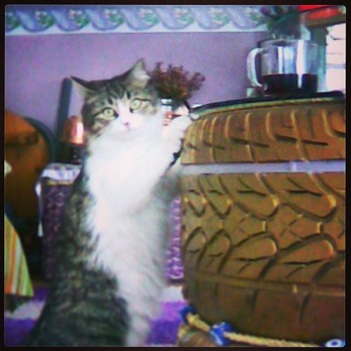 Kimin Kedisi Iste Cola kola love cat glass evet onlar tekerlek mor duvar nazar boncuğu boncuk kedi cat ?? instamood etiket boku hımf end