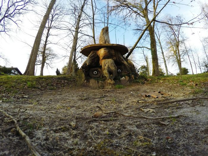 Taking Photos Picoftheday Nature_collection Gopromoment Sky And Trees Gopro Shots Capture The Moment Nature Photography Tree_collection  Goprohero4 GoPrography